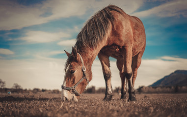 Horse Portrait Photography