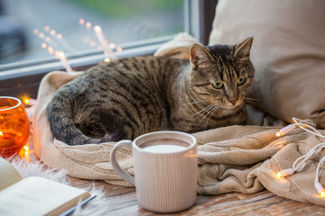 Fototapete - tabby cat lying on window sill with book at home