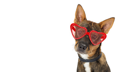Dog Wearing Valentine Heart Glasses Banner