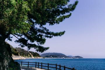 sea of japan under the pines from Fukuoka, Japan