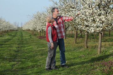 Farmer and agronomist examining blossoming plum orchard