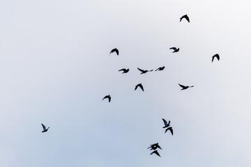 Flying birds on the sky