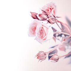 Beautiful soft roses