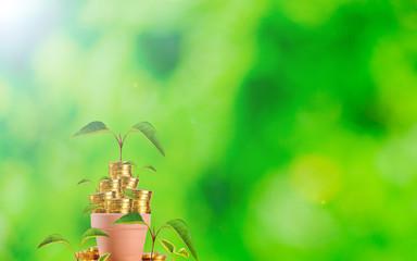 たくさんのお金 植物 成長