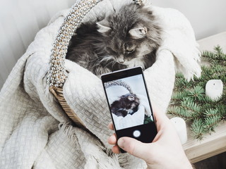 Sweet kitten in a wicker basket posing for a photo on a mobile phone