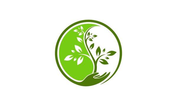 Tree yin yang logo vector