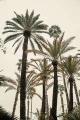 African Palm Grove