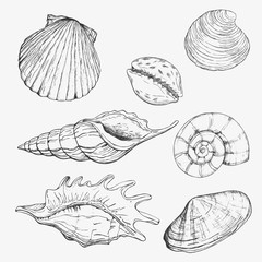 Sea shell. Hand drawn vector illustrations - collection of seashells. Marine set