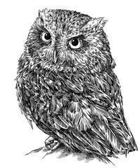 Foto op Plexiglas Uilen cartoon black and white engrave isolated owl illustration