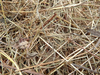 Close up view of dry hay - natural background