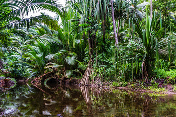 Fantasy jungle green landscape with tropical lake in mangrove rain forest , reflection, Papua New Guinea