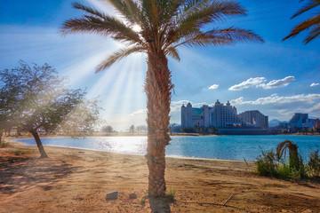 Palm in Sunbeams at daytime, Eilat, Israel