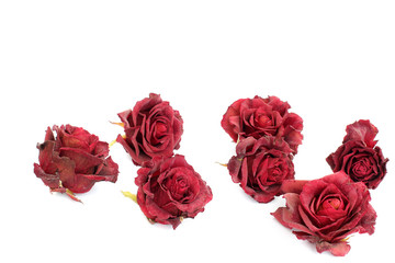 Sluggish red rose on a white background. Dried rose petals on white background. Flowers. Love.