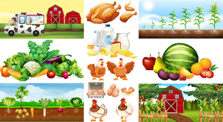 Farm scenes with vegetables and chickens