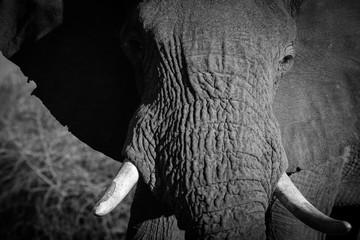 Elephant of Madikew