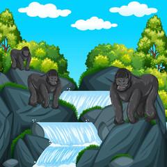 Three gorillas at the waterfall