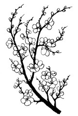 Branch of sakura with flowers. Apple-tree flowers. Japan cherry blossom. Black and white outline illustration hand drawn painting. Isolated on white background.