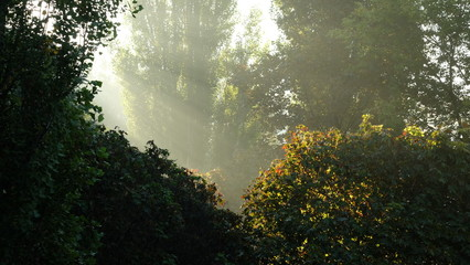 The sunlight that breaks through the green thickets.