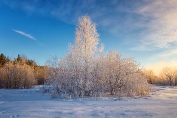 Заснеженный зимний лес с кустами, Россия, Урал, январь