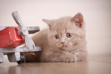 Young cat pilot