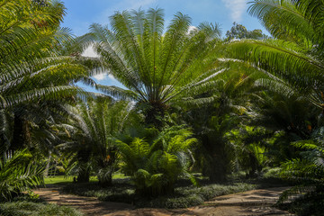 Palms grow like grasses, with sheathes that wrap around the stem