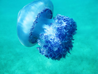 Beautiful jellyfish under blue water in the sea in Greece