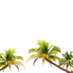Coconut palm trees frame isolated on white background.