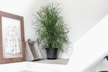 modern interior detail decoration trend, Flowers pot at corner of up-down stairs