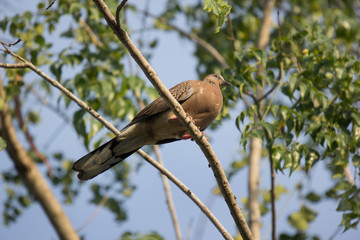 Pigeon sitting on tree branch