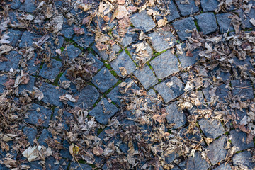 Autumn leaves on walkway