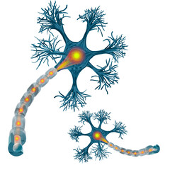 Neuron that is the main part of the nervous system.