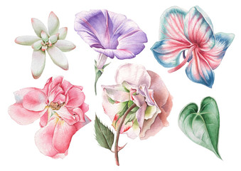 Set with watercolor flowers. Rose. Petunia. Orchid. Succulent. Hand drawn.