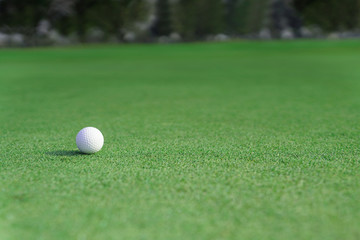 golf ball on a green fairway grass