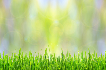Fototapete - Spring or summer abstract background with green grass and drops of dew bokeh lights