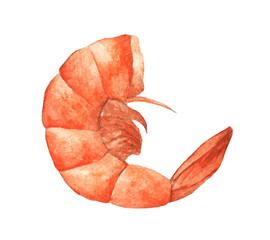 Single orange shrimp painted in watercolor isolated on white background