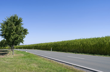Roads: Idyllic country road at the edge of an industrial hemp field on the outskirts of Bethenhausen in Eastern Thuringia