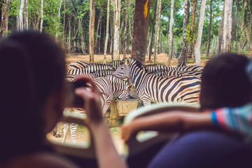Tourists watch the animals from the bus in the safari park