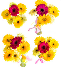 lots of big beautiful flowers Gerbera with no background, Gerber on isolated background set of colors.