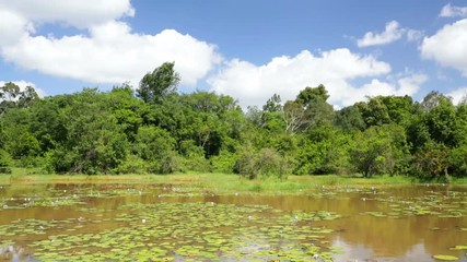 Wall Mural - The beautiful Lily Lake in Karura Forest, Nairobi, Kenya with blue sky.
