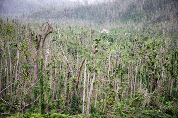 Broken trees in Morne Trois Pitons National Park after Hurricane Maria in Dominica