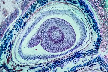 spermium mikroskop