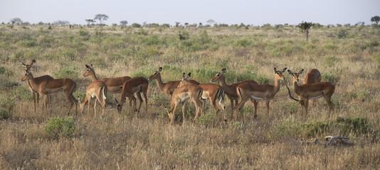 Animali nella savana