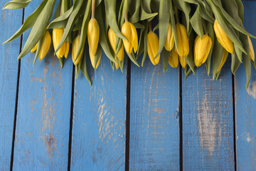 on a blue background a bouquet of yellow tulips