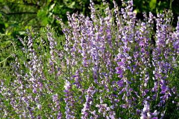 doğa flowers history people sea bee