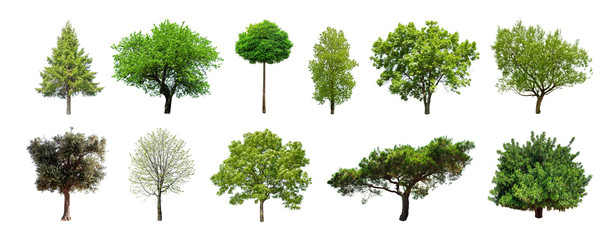 Set of green trees isolated on white background. Different kinds of tree collection Wall mural