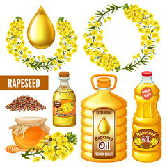 Set of seeds and rape flowers, canola oil. Brassica napus. Honey from rape. Isolated vector illustration  on white background.