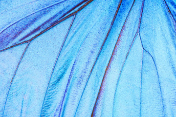 Detail of a butterfly wing