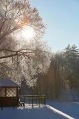 Sunny winter christmas background