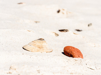 Color outdoor image of a single isolated mussel shell stranded on a fine white sand beach beneath an orange stone taken near Cape Town, South Africa, on a sunny bright day