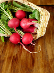 Freshly picked and washed radish with green tops in a wicker basket